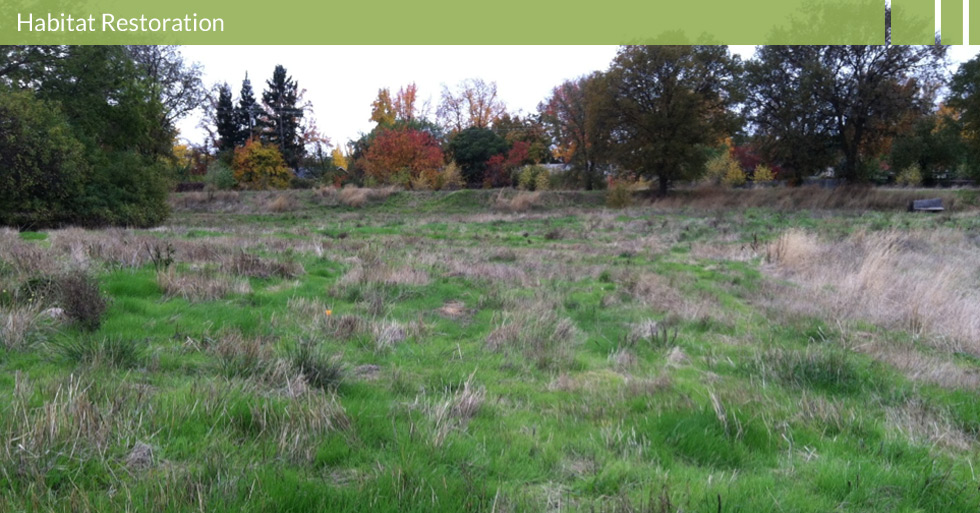 Melton Design Group designed the award-winning Verbena Fields in Chico, CA. This natural neighborhood park was designed around restoring the area to its natural environment. Interpretative panels, natural grasses, pedestrian trails, and open space are all features of this restored habitat.