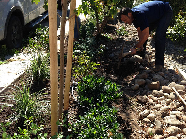 Melton gets their hands dirty for Mdg landscape architects